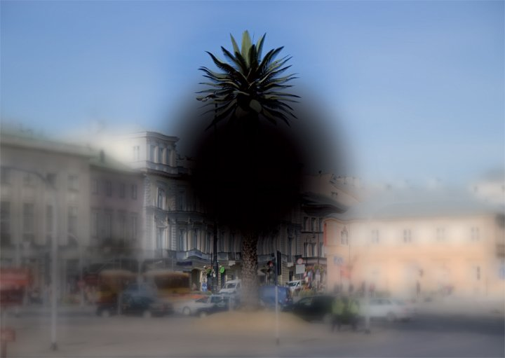 A palm tree in Warsaw as seen be people with visual impairment.